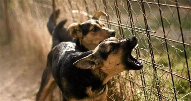 Неназванные собаки