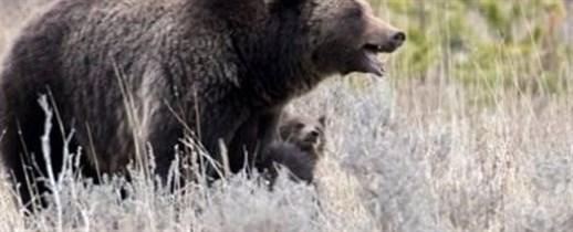 Медведи Елисея