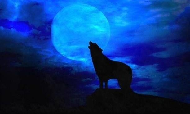 Воют ли волки на луне?