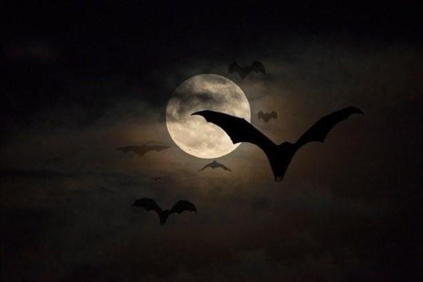 Связь вампир-летучая мышь