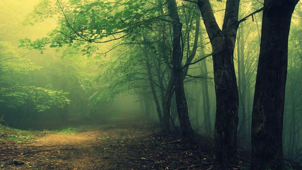 паранормальные явления в лесу