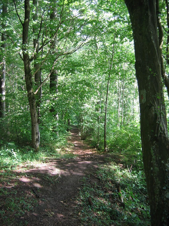 горная система и лесной массив