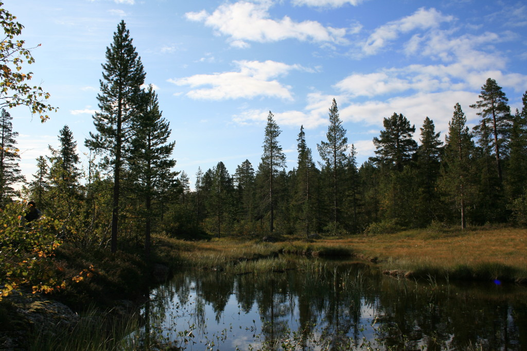лес в Норвегии