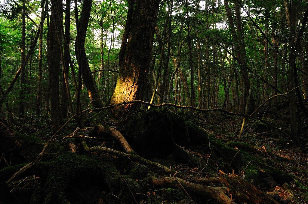 самый жуткий лес в мире