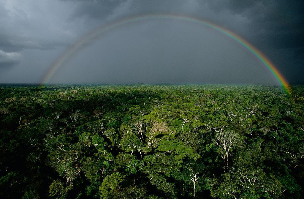 радуга, амазонка