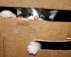 1-kitten-in-box-use-this