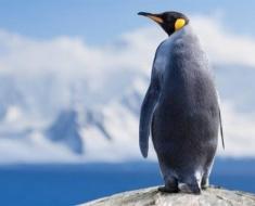 1a-antarctica-163344719