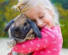 1a-bunny-187013982