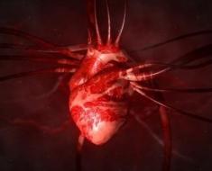 1a-human-heart-109721217