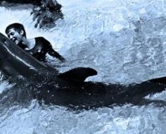 1a-the-dolphin