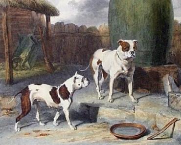 Old-English-Bulldogs