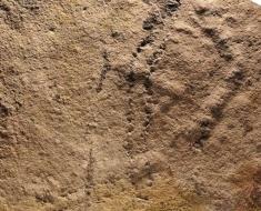 oldest-footprints-ever