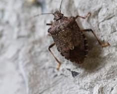 10 странных способов выживания насекомых