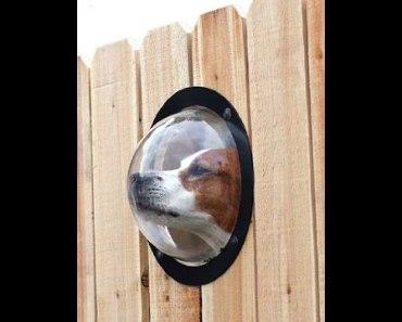 10 лучших изобретений для владельцев собак
