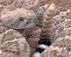 Топ 10 самых ядовитых змей