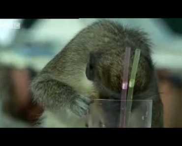 10 этапов в истории питьевых вечеринок